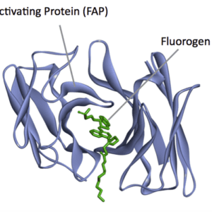 Fluorogens and tagging vectors for creating and expressing FAP fusion proteins.