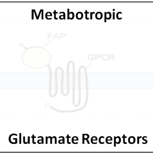 Metabotropic Glutamate Receptors