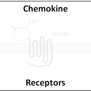 Chemokine Receptors