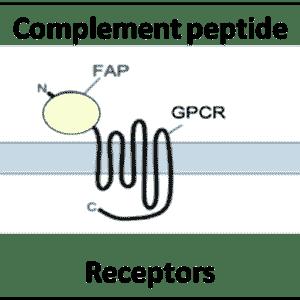 Complement Peptide Receptors