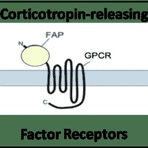 Corticotropin-releasing Factor Receptors