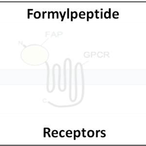 Formylpeptide Receptors