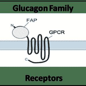 Glucagon Family Reeptors