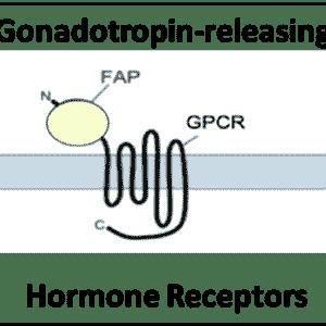 Gonadotropin-releasing Hormone Receptors