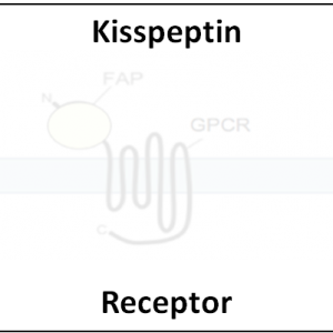 Kisspeptin Receptor
