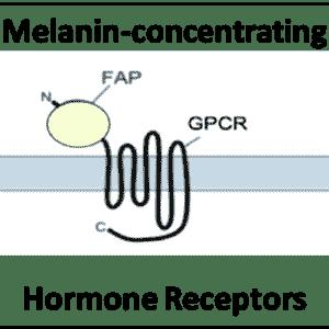 Melanin-concentrating Hormone Receptors