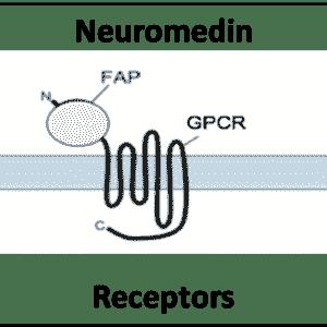 Neuromedin Receptors
