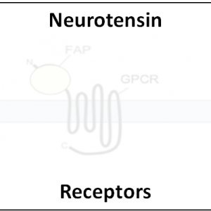 Neurotensin Receptors