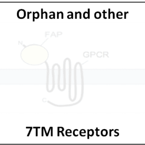 Orphan and other 7TM Receptors