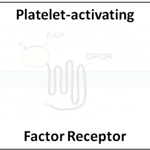 Platelet-activating Factor Receptor