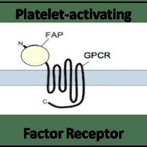 Platelet-activating Factor Receptor