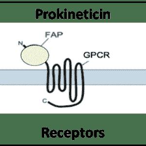 Prokineticin Receptors