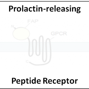 Prolactin-releasing Peptide Receptor