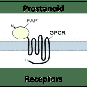 Prostanoid Receptors