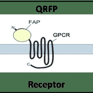 QRFP Receptor