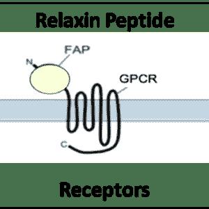 Relaxin Peptide Receptors