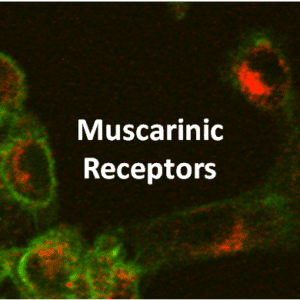 Muscarinic Receptor Cell Lines