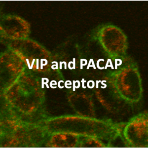 VIP and PACAP Receptor Cell Lines